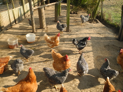 funcionamiento del vps-Hosting compartido-gallinas